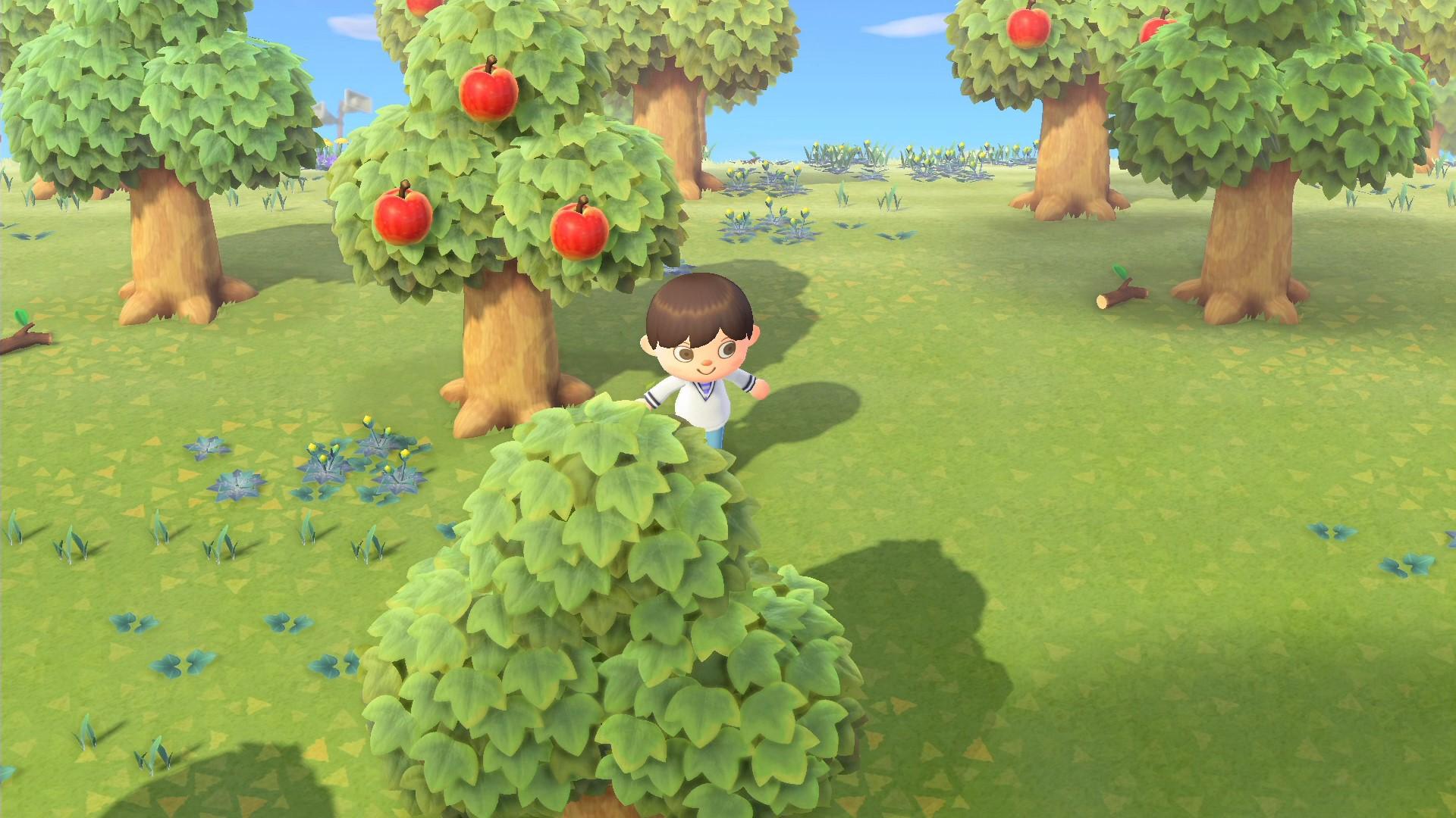 この島にはリンゴの木がたくさんあるようだ